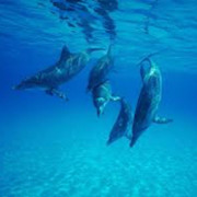 Dolphins-square